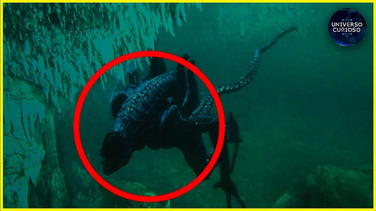 Criaturas estranhas que vivem na Fossa das Marianas!