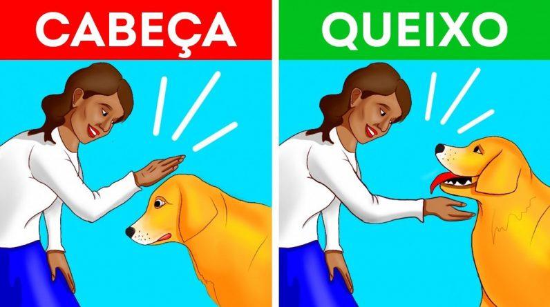 Como se Aproximar de Um Cachorro de Um Jeito Certo e Seguro