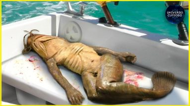 Uma sereia foi capturada na Tailândia?