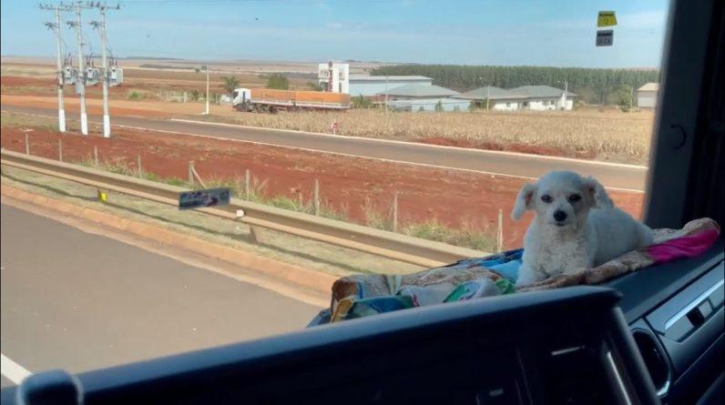 A cachorrinha mais viajada do Brasil eita essa noite deu frio que fui para em um hotel.