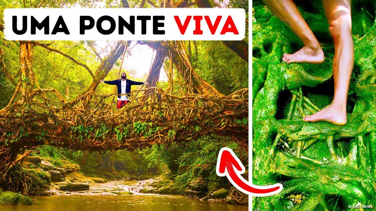 Tribos Indianas Constroem Pontes com Raízes de Árvores que Duram Mais de 500 Anos