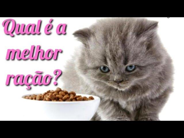 Qual seria a melhor ração para o seu gato e porque? Descubra aqui!!